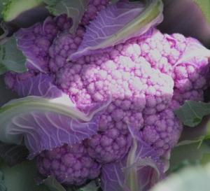 Cauliflower!