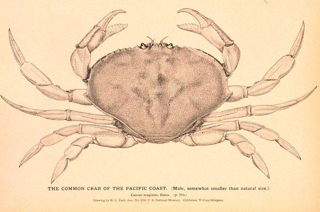 crab_poster