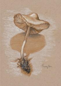 mushroom_sketch